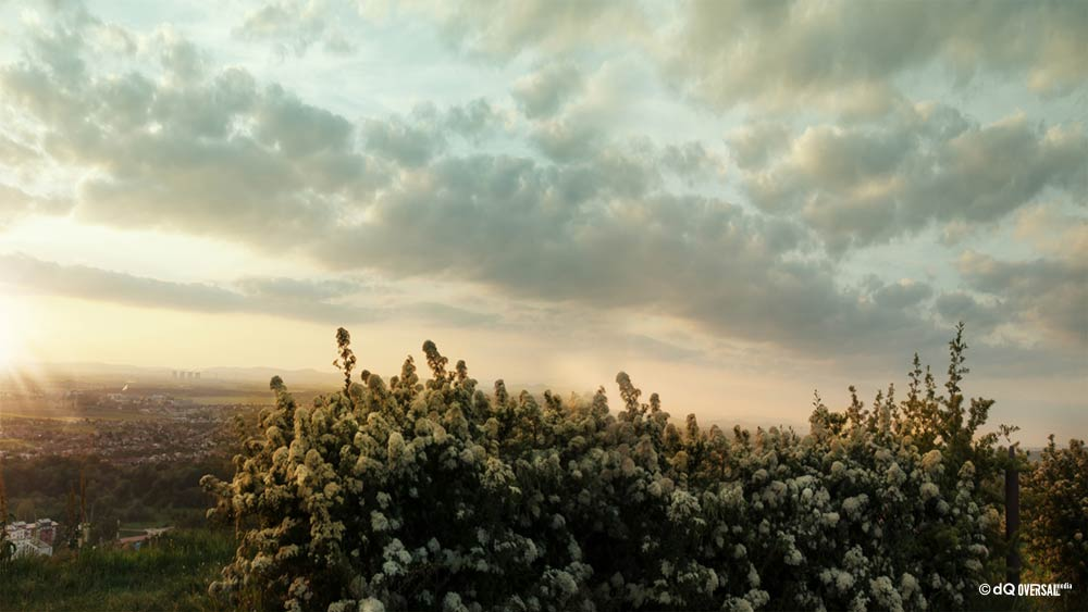 Arbustos en flor blanca en la puesta de sol SKU: la-0011