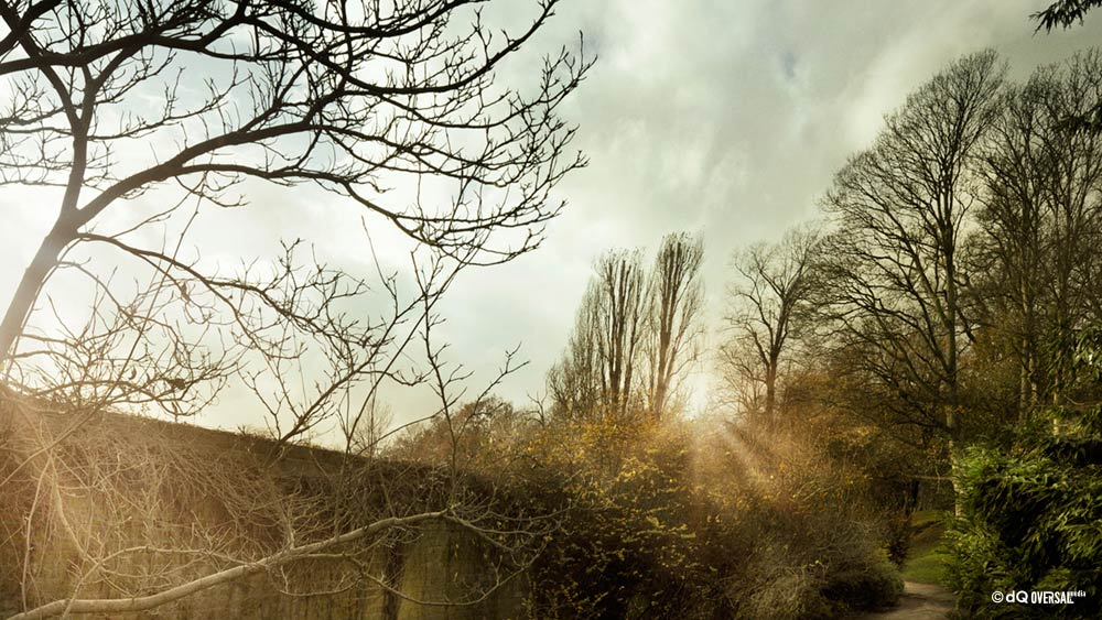 Magical sunshine in the trees - 木で魔法の日差し SKU: la-0096