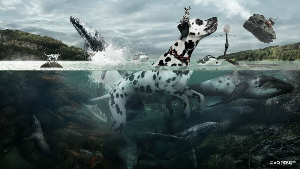 Dalmatian dog swimming with whales SKU: ar-0028